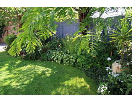 Tropical Garden Ideas Nz